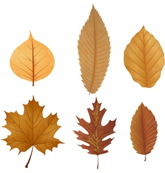 Dry leaf collection vector