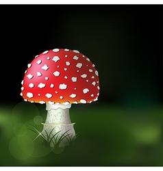 mushrooms vector image