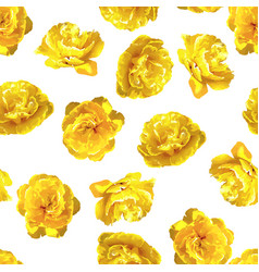 seamless pattern with fluffy yellow tulips vector image
