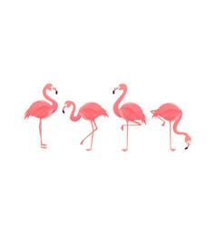 flamingo bird design on background vector image