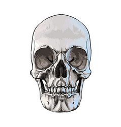 human skull from a splash watercolor colored vector image