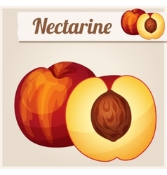 Nectarine Detailed Icon vector