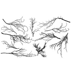 Set silhouettes branches different trees vector