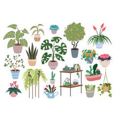 home plants houseplants set green botanical vector image