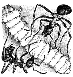 ants attacking larva vector image