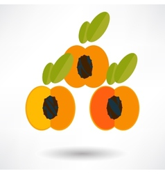 Apricot icon with shadow in flat design vector image