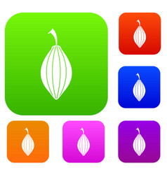 Black cardamom pod set color collection vector