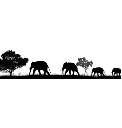 elephants silhouette and trees in savannah vector image