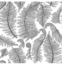 Graphic fern leaves vector