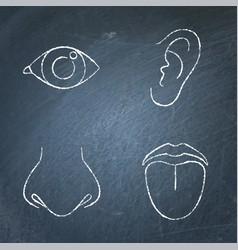 human sense organ icon sketch set on chalkboard vector image