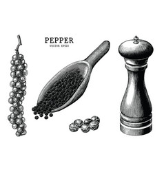 pepper collection hand draw vintage clip art vector image