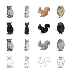 raccoon animal cat and other web icon in vector image vector image