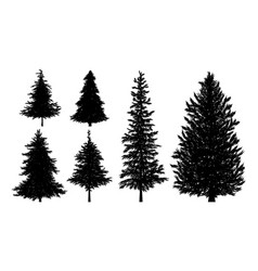 Silhouette fir or pine trees vector