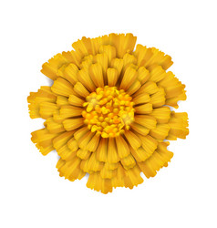 Yellow isolated flower vector