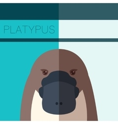Platypus Flat Postcard vector image