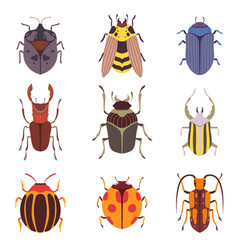collection various insects species bugs vector image