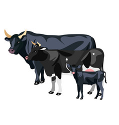 Cow calf and bull isolated vector