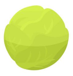 eco garden cabbage icon isometric style vector image