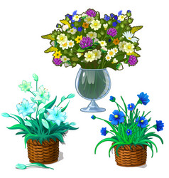 Houseplants in pot bouquet of wildflowers in vase vector