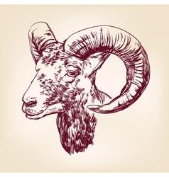 goat hand drawn llustration realistic sketch vector image vector image