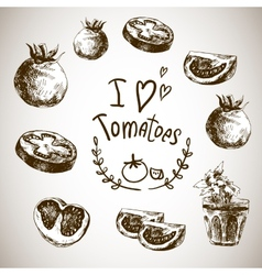 Hand Drawn Sketch of vegetables Tomatoes vector image
