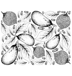 Hand drawn of garcinia acuminata and couepia longi vector