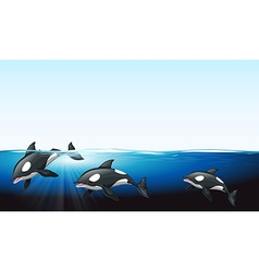 Whales swimming under the sea vector