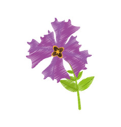 Drawing iris flower garden botanical vector
