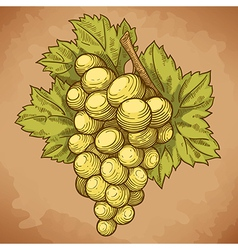 engraving grapes on the branch retro vector image vector image