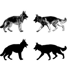 German shepherd dog silhouette and sketch vector