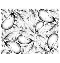 Hand drawn background of couepia longipendula frui vector