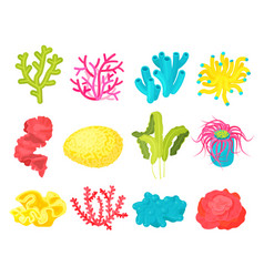 seaweed and corals set vector image