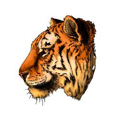 tiger head portrait from a splash watercolor vector image