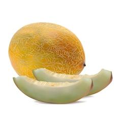 Rock Melon vector image