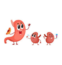 funny smiling human stomach and kidney characters vector image