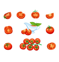 set red tomato vector image vector image