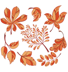 Collection beautiful colourful autumn leaves vector