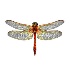 dragonfly from a splash watercolor colored vector image