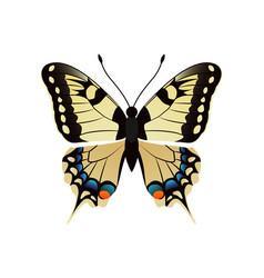 family papilionidae butterfly vector image