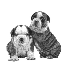 Puppy bulldogs 02 vector