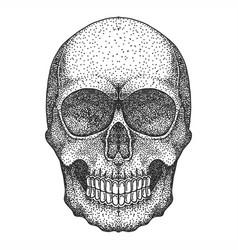 skull head dotwork vector image