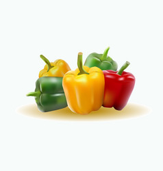 sweet pepper vector image