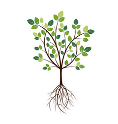 Color tree and roots vector
