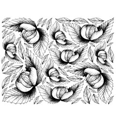 Hand drawn background of fresh dengen fruits vector