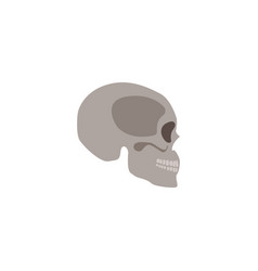skull head bone human skeleton flat vector image