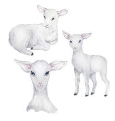 Watercolor set white lamb easter image vector