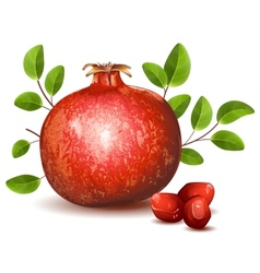 Pomegranate with leaves vector image vector image