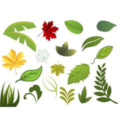 set of different leafs vector image vector image