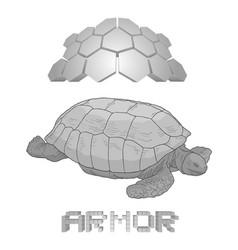 armor turtle draw vector image