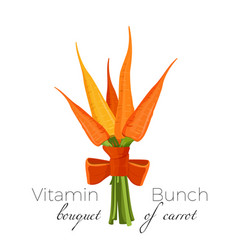 Bunch of carrots bound with parsley green spinach vector